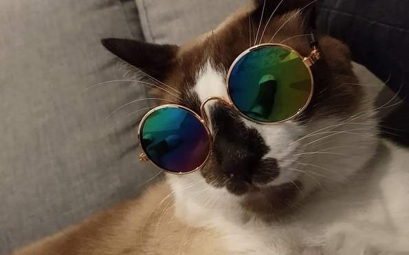 licoes-gatos-quarentena_blog-Marina-Mizioka